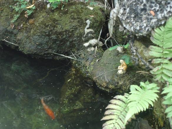 Cá nước