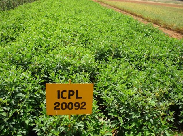 ChickpeaICPL20092.jpg