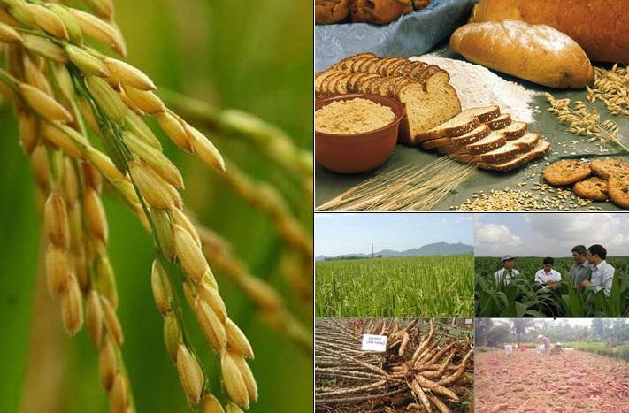 Food Crops News